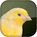 Download Canary Bird Sounds 2017 1.0 APK