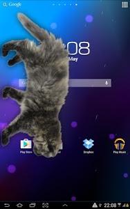 Download Cat Walks in Phone Cute Joke 2.1 APK