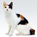 Download Cat sounds 1.25 APK