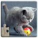 Download Cats Jigsaw Puzzles Games - For Kids & Adults ? 18.2 APK