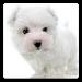 Download Dog Wallpapers! 5.2 APK