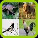 Download Funny Animal sounds 5.2 APK