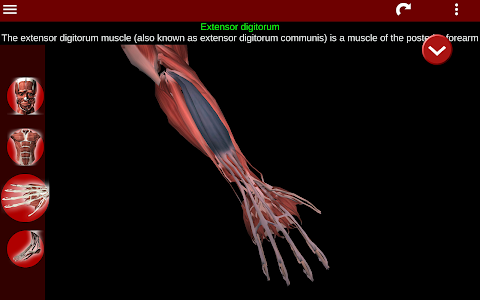 Download Muscular System 3D (anatomy) 2.0.0 APK