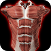 Download Muscular System 3D (anatomy) 2.0.3 APK