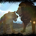 Download Real Lion Simulator 2.1 APK