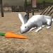 Download Real Rabbit Simulator 1.8 APK